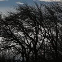 Ветреная и туманная погода ожидается в Казахстане